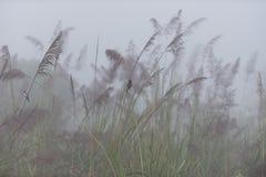 Mgłowy ranek w parku narodowym Chitwan zdjęcie stock
