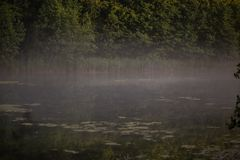 Mgłowy ranek w polu w lecie zdjęcie stock