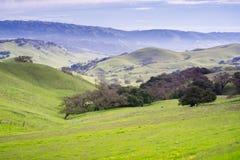 Mgłowy ranek w wzgórzach południowa San Fransisco zatoka, San Jose, Kalifornia Fotografia Stock