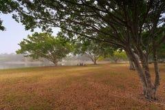 Mgłowy ranek wzdłuż Evandale jeziora Zdjęcia Royalty Free