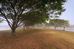 Mgłowy ranek wzdłuż Evandale jeziora Zdjęcie Stock