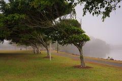 Mgłowy ranek wzdłuż Evandale jeziora Obraz Stock