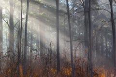 Mgłowy słońce promieni połysk przez lasu zdjęcie royalty free