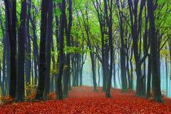 Mgłowy tajemniczy las Fotografia Royalty Free