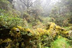 mgłowy tropikalny las deszczowy obraz stock