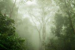 Mgłowy tropikalny las deszczowy w mgle, Miękka ostrość zdjęcie royalty free