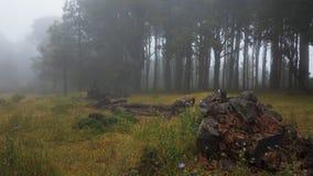 Mgłowy, widmowy las, z przerażającymi, ciemnymi drzewami, obrazy stock