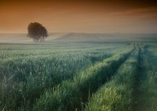 mgłowy wschód słońca Fotografia Royalty Free