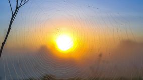 Mgłowy wschodu słońca thgrough sieć zdjęcie wideo