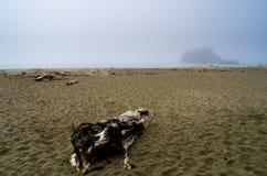 Mgłowy wybrzeże Obrazy Royalty Free