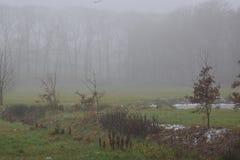 Mgłowy zima krajobraz zdjęcie royalty free
