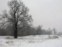 Mgłowy zima krajobraz Obrazy Royalty Free
