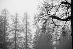 Mgłowy zima las z nagimi drzewami, czarny i biały fotografia royalty free