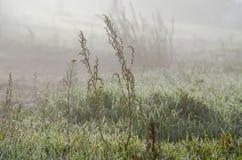 Mgły above zielona trawa zdjęcie royalty free