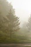 Mgły above zielona trawa zdjęcia stock