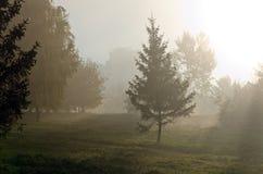 Mgły above zielona trawa obrazy stock