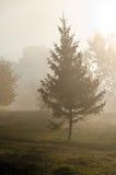Mgły above zielona trawa obrazy royalty free