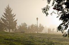 Mgły above zielona trawa zdjęcie stock