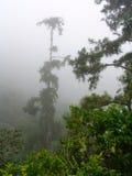 Mgły dżungli dżdżysty tropikalny las deszczowy Jamaica Obrazy Royalty Free