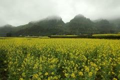 Mgły i Canola pola krajobraz fotografia stock