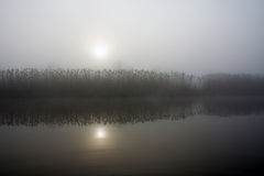 mgły płocha Obrazy Royalty Free