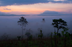 mgły ranek światło słoneczne Zdjęcie Stock