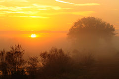 mgły słońce zdjęcia stock