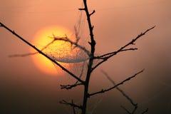 mgły sawannowa pająka Swaziland sieć Obrazy Stock