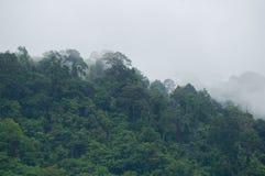 Mgły wydźwignięcie od dżungli fotografia royalty free