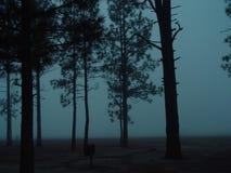 mgła. Zdjęcia Royalty Free