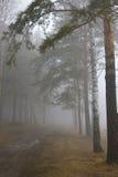 mgła. Zdjęcie Royalty Free