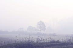 mgła Zdjęcia Royalty Free
