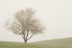mgła drzewo Obraz Royalty Free