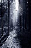 Mgła i pogodni promienie w lesie Zdjęcia Stock