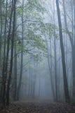 mgła jesieni las Obraz Stock