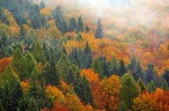 mgła jesieni las Fotografia Stock