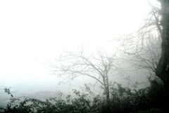 mgła krajobrazu Zdjęcia Stock