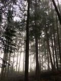 mgła las Zdjęcie Stock