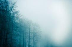 Mgła las 4 Obrazy Royalty Free