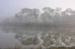 mgła las Obrazy Stock