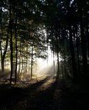 mgła las Obrazy Royalty Free
