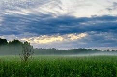 Mgła na polu Zdjęcia Stock