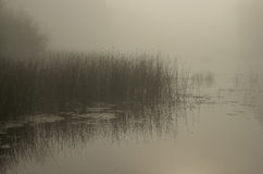 Mgła na rzece Obrazy Royalty Free