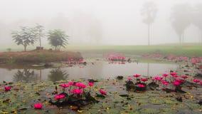 Mgła natury otaczanie z drzewami, jeziorem i lotu, Zdjęcia Royalty Free