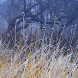 mgła ogród Obrazy Royalty Free