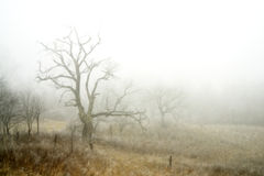 mgłowa krajobrazowa zimy. Zdjęcie Royalty Free