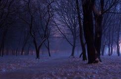 Mgłowa zimy noc w parku Zdjęcia Stock