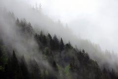 Mgłowe chmury wzrasta od wysokogórskiego halnego lasu Obraz Stock