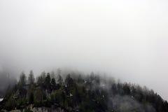 Mgłowe chmury wzrasta od wysokogórskiego halnego lasu Obraz Royalty Free