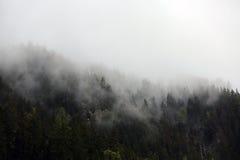 Mgłowe chmury wzrasta od wysokogórskiego halnego lasu Zdjęcie Royalty Free
